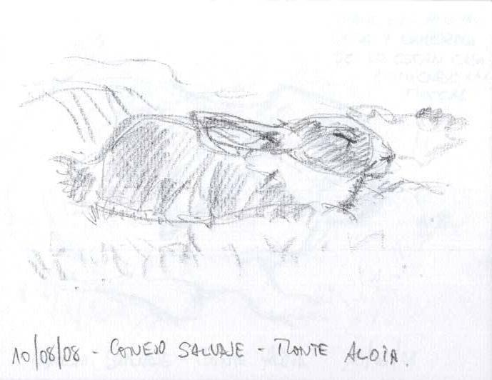 dibujo-conejo-grafito