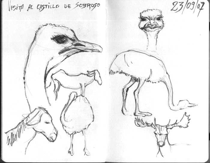 dibujo-avestruz-tinta