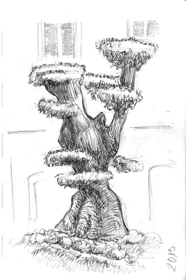 Bonsai olivo, tinta pluma