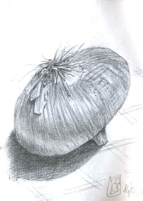 dibujo cebolla grafito